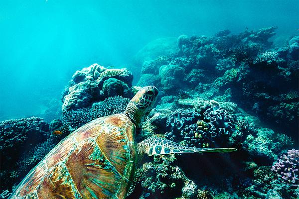 Turtle Wave